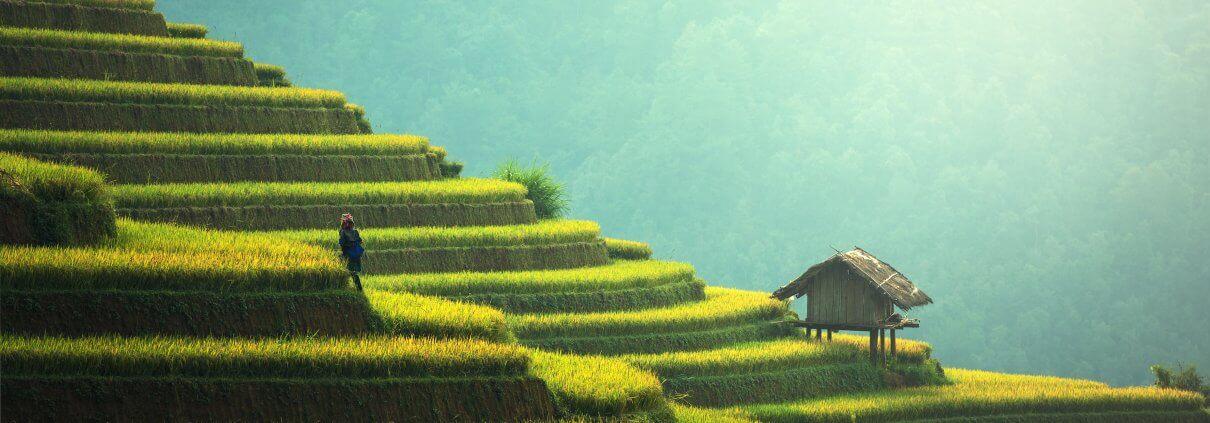 Bali rice paddies